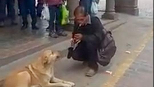 Perro acompaña a músico callejero y brindan 'show' en la Plaza Mayor del Cusco