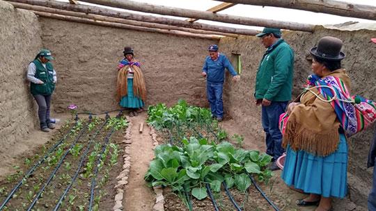 Campesinos producen más de 2,000 toneladas de hortalizas gracias a fitotoldos